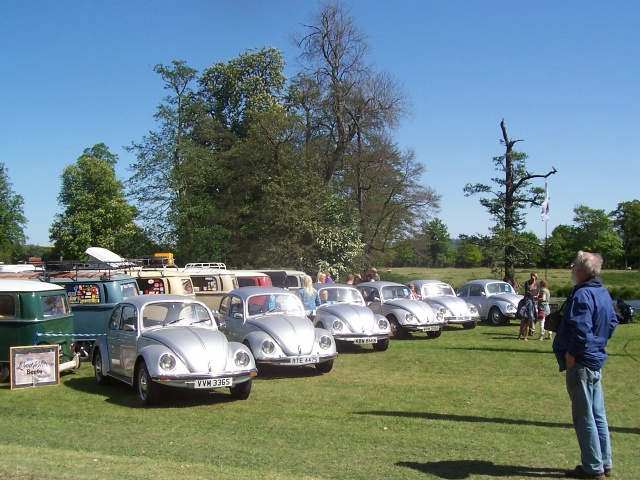 Last Edition Beetles